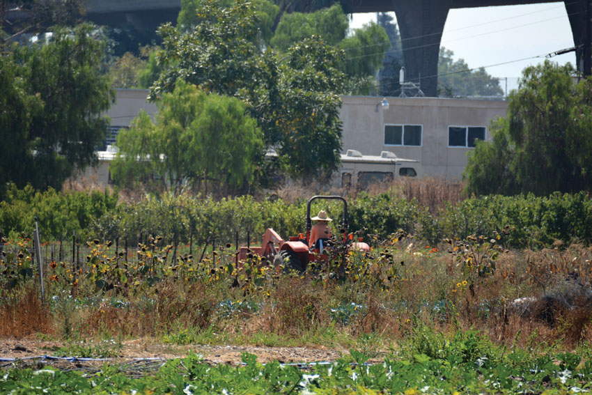 A farmer working on his tractor in the fields at Veggielution farm, located in the heart of Silicon Valley, off Hwy 680 in San Jose, Calif.